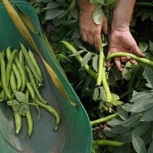 One in four people are growing their own food, baking bread or making jams, according to a new survey